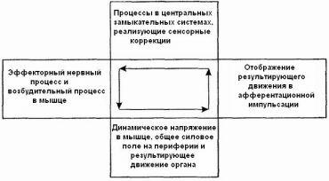 """...восприятия """" привели Н.А. Бернштейна к пересмотру структуры отдельного поведенческого акта - схема дуги была..."""